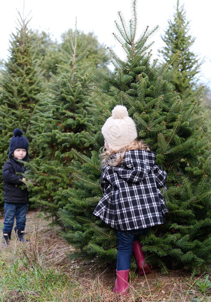 christmas-tree-farm-with-kids